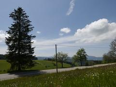 Schwarzwald 2019 (Pierre Pattipeilohy) Tags: baume bomen trees heuvels hills green gras grass car blue cloud wolke pierrepattipeilohij