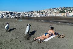 (Beach Dogs) (Robbie McIntosh) Tags: leicam9p leica m9p rangefinder streetphotography 35mm leicam autaut candid strangers leicaelmarit28mmf28iii elmarit28mmf28iii elmarit 28mm seaside tan naked sand lidomappatella mappatellabeach woman belly dogs