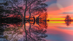 The End of the Day (el-liza) Tags: sunset nature outdoor outside trees reflection vivid vibrant colourful pink blue yellow australia