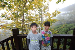 IMG_4564 (JIMI_lin) Tags: 南投 大崙山 銀杏 武岫農圃 武岫農場 武岫景觀餐廳 大崙山茶園 taiwan 茶園