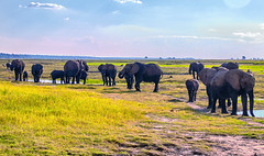 Chobe Natl Park, Botswana-2019-0002 (brantleyhighline) Tags: africa europe italy location odyssey safari southafrica