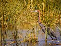Lower Zambezi Natl Park-2019-0017 (brantleyhighline) Tags: africa europe italy location odyssey safari southafrica