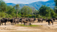Lower Zambezi Natl Park-2019-0008 (brantleyhighline) Tags: africa europe italy location odyssey safari southafrica
