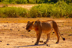 Lower Zambezi Natl Park-2019-0004 (brantleyhighline) Tags: africa europe italy location odyssey safari southafrica