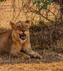 Lower Zambezi Natl Park-2019-0003 (brantleyhighline) Tags: africa europe italy location odyssey safari southafrica