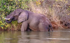 Lower Zambezi Natl Park-2019-0006 (brantleyhighline) Tags: africa europe italy location odyssey safari southafrica