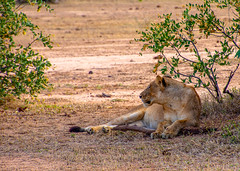 Lower Zambezi Natl Park-2019-0002 (brantleyhighline) Tags: africa europe italy location odyssey safari southafrica