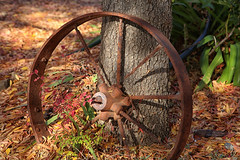 52 in 2019 Challenge - #37 - Invention (crafty1tutu (Ann)) Tags: autumn tree wheel metal wagon rust spokes rusty challenge anncameron canon5dmkiii canon24105lserieslens crafty1tutu 52in2019challenge 37invention