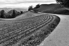 Bends (Role Bigler) Tags: bw canon canoneos5dsr ef35mm12isusm emmental filmemulation filmemulationkodaktrix400 natur schwarzweiss schweiz strasse suisse switzerland agricultur backroad blackwhite blackandwhite curve curves grassland meadow nature overview primelens road trees view
