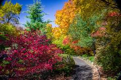 COLORFUL FALL DAY (5816OL) Tags: fallcolors arboretum2014 arboretum dad