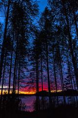 Sunset on lake seen behind trees 2 (VisitLakeland) Tags: finland kuopiotahko lakeland summer auringonlasku evening ilta järvi kesä kesäyö lake luonto maisema nature outdoor scenery sunset