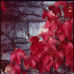 Autumn (Jean-Louis Piraux) Tags: bronicasqai ektachrome200 négatif expired square