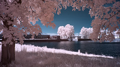 X-A1 2019-06-01 073 (linebrell) Tags: fujinonlensxf23mmf2rwr infrared 720nm outdoor