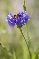 Im Garten-06632 (thosie63) Tags: altglas blumenundpflanzen pentacon28135mm zwischenringe