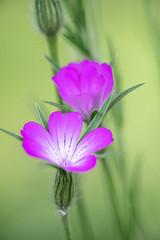 Im Garten-06608 (thosie63) Tags: altglas blumenundpflanzen pentacon28135mm zwischenringe
