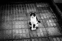 Solitary One (eskayfoto) Tags: canon eos 700d t5i rebel canon700d canoneos700d rebelt5i canonrebelt5i sk201903057687editlr sk201903057687 lightroom monochrome mono bw blackandwhite cat feline gato urban