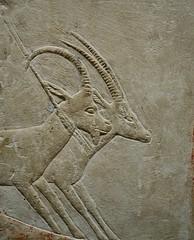 Antelope (pjpink) Tags: tomb burialchamber kegemni vizier ancient egyptian history carving detailed saqqara egypt january 2019 winter pjpink 2catswithcameras
