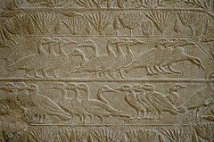 Ducks (pjpink) Tags: tomb burialchamber kegemni vizier ancient egyptian history carving detailed saqqara egypt january 2019 winter pjpink 2catswithcameras
