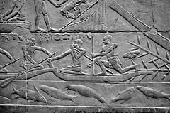 Fish Variety (pjpink) Tags: tomb burialchamber kegemni vizier ancient egyptian history carving detailed saqqara egypt january 2019 winter pjpink 2catswithcameras blackandwhite bw monochrome