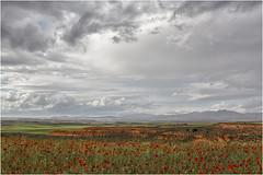 Poco antes de que nos alcanzase la tormenta (Fernando Forniés Gracia) Tags: españa aragón zaragoza calatayud ateca sierradearmantes paisaje landscape naturaleza nubes cielo amapolas ababoles margaritas
