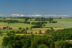 route de Castres, Drémil-Lafage (Gregouill) Tags: arbre campagne champs mist montagne paysage printemps2019 pyrénées landscape lauragais colline hill