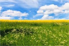 3 Farben (linke64) Tags: thüringen deutschland germany gras grün natur landschaft himmel wolken raps blüten blau wiese frühling farben schatten rapsfeld gelb weis