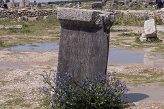 Flowers and stones (Irina1010) Tags: stone inscription roman archaeologicalsite flowers plants blue puddles water reflections history morocco volubilis canon 2019 latin outstandingromanianphotographers