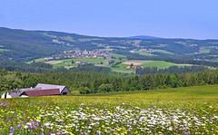 Wenigzell und Umgebung (Mariandl48) Tags: wenigzell dorf blumenwiese bauernhöfe landwirtschaft felder wiesen steiermark austria natur wald wenigzellerland