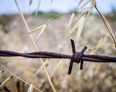 Fences (HamillTravels) Tags: tgcloseup wire fence closeup barbwire barb nikon 610