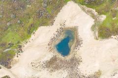 Bison watering hole in the Dutch national park Zuid-Kennemerland