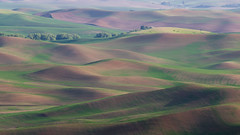 Palouse Pastel (fotostevia) Tags: palouse palousehills steptoe steptoebutte agriculture fields goldenhour painterly patterns wheat wheatfields pentaxart