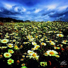 Flowers (Amy Charlize) Tags: amycharlize focosocial flower colors photography sky clouds