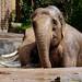 Berliner Zoo - Elefantenbad