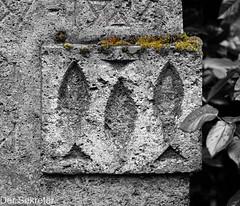 Drei Fische unter Moos --- Three fish under moss (der Sekretär) Tags: blatt blätter christian detail fisch friedhof friedhofsihlfeld gewächs grab grabmal grabstein gravur gräber inschrift kantonzürich moos pflanze schweiz sihlfeldcemetery stein switzerland symbol zurich zürich abgeblättert abgebröckelt alt bröcklig cantonofzurich cemetery christlich closeup dead death engraving fish gestorben grave gravestone graveyard growth inscription lasuisse leaf leafs moss old plant sterben stone tombstone tot verwittert weatherbeaten weathered