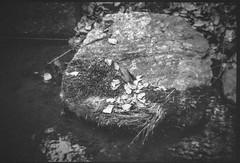large rock, creek's edge, I40 reststop, central NC, Bencini 24S, Bergger Pancro 400, HC-110 developer, 5.28.19 (steve aimone) Tags: rock stone creek reflections moss driedleaves centralnorrhcarolina i40reststop bencini bencinikoroll24s berggerpancro400 hc110developer 120 120film film halfframe mediumformat monochrome monochromatic blackandwhite landscape