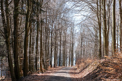 Early spring forest, Kell am See (Germany) (werner.marx.kell) Tags: kellamsee forest earlyspring sigmadp3m foveon