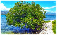 Beach Tree (plismo) Tags: mareadeportillo granma cuba tree beach sea plismo bluesea