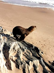 One of many seals sleeping on the beach. It got a big shock when I crept up on my bike