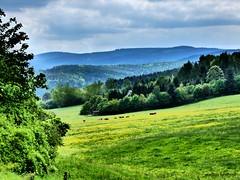 Der kreativste Künstler ist die Natur (The most creative artist is nature) (skruemel86) Tags: wald thüringer landschaft wiese wolken kühe panasonic lumix fz82 cows clouds meadow landscape thuringian forest ngc