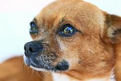 O Chi :) (Zéza Lemos) Tags: portugal vilamoura jardim dog chien cão cachorro perro animais animal fotografia fotos canon animaldeestimação veterinário animaisdomésticos garden