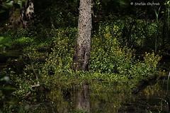 Mönchbruch 2019 101 (60386pixel) Tags: mönchbruch naturschutzgebietmönchbruch naturschutzgebiet natur hessen sommer