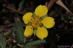 Mönchbruch 2019 096 (60386pixel) Tags: mönchbruch naturschutzgebietmönchbruch naturschutzgebiet natur hessen sommer