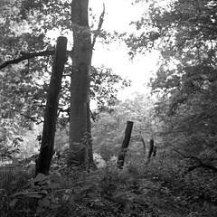 the fence 4 (salparadise666) Tags: rolleiflex sl66 planar 80mm fomapan 100 boxspeed caffenol rs nils volkmer fence 6x6 square medium format analogue film camera landscape nature bw black white monochrome detail hannover region niedersachsen germany