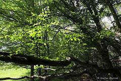 Mönchbruch 2019 118 (60386pixel) Tags: mönchbruch naturschutzgebietmönchbruch naturschutzgebiet natur hessen sommer