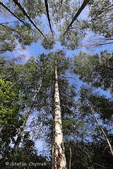 Mönchbruch 2019 117 (60386pixel) Tags: mönchbruch naturschutzgebietmönchbruch naturschutzgebiet natur hessen sommer