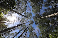 Mönchbruch 2019 116 (60386pixel) Tags: mönchbruch naturschutzgebietmönchbruch naturschutzgebiet natur hessen sommer