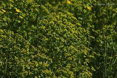 Mönchbruch 2019 106 (60386pixel) Tags: mönchbruch naturschutzgebietmönchbruch naturschutzgebiet natur hessen sommer
