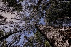 Mönchbruch 2019 115 (60386pixel) Tags: mönchbruch naturschutzgebietmönchbruch naturschutzgebiet natur hessen sommer