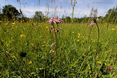 Mönchbruch 2019 107 (60386pixel) Tags: hessen sommer natur naturschutzgebiet mönchbruch naturschutzgebietmönchbruch