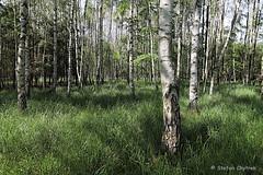 Mönchbruch 2019 114 (60386pixel) Tags: mönchbruch naturschutzgebietmönchbruch naturschutzgebiet natur hessen sommer